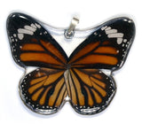 BU-0090-WP<BR>Whole Butterfly Pendant, Striped Tiger