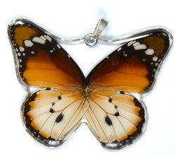 BU-0240-WP<BR>Whole Butterfly Pendant, African Monarch Butterfly