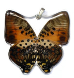BU-0380-WP<BR>Whole Butterfly Pendant, Shining Red Charaxes