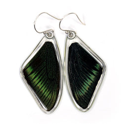 BU-0515-T-ER<BR>Butterfly Earrings, Alpine Black Swallowtail, Top Wings