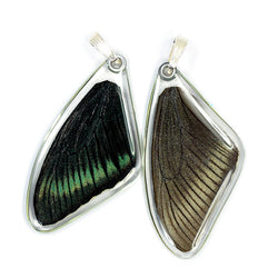 Real Butterfly Wing Pendant Only, Alpine Black Swallowtail, Top Wing