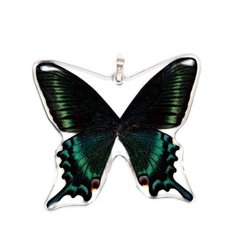 BU-0515-WP<BR>Whole Butterfly Pendant, Alpine Black Swallowtail