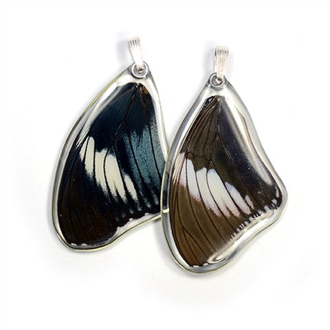 BU-0535-T-PE<BR>Butterfly wing pendant ONLY, Scarce Blue Diadem Butterfly, top wing