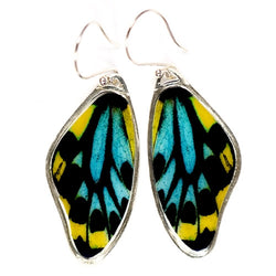 BW-0620-ER<BR>Rare Butterfly Image Earrings<BR>Richmond Birdwing