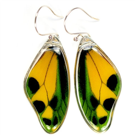 BW-0630-ER<BR>Rare Butterfly Image Earrings<BR>Tithonus Birdwing Butterfly