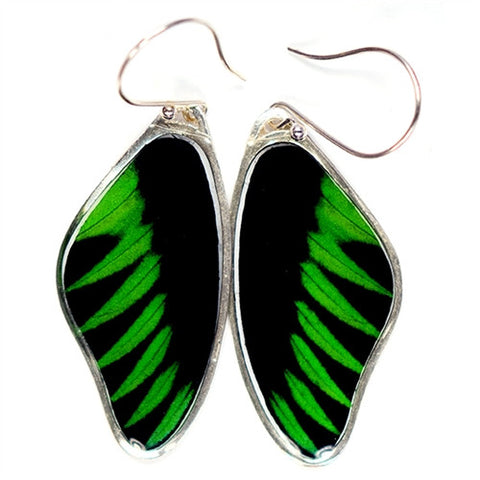 BW-0670-ER<BR>Rare Butterfly Image Earrings<BR>Rajah Brooke's Birdwing