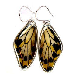 BW-0695-ER<BR>Rare Butterfly Image Earrings<BR>Wallace's Golden Birdwing Butterfly