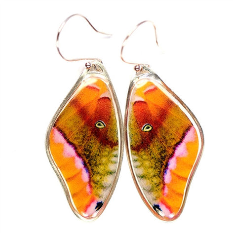 BW-0851-ER<BR>Rare Butterfly Image Earrings<BR>Polyphemus Moth
