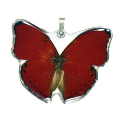 Whole Butterfly Pendant, Cymothoe Sangaris