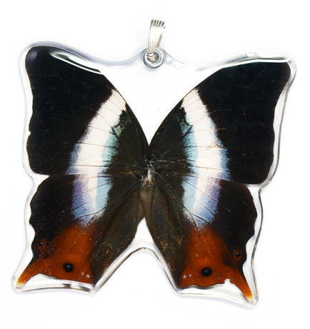 Whole Butterfly Pendant Only, SS bail, Violet-banded Palla