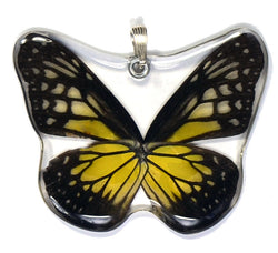 Whole Butterfly Pendant Only, SS bail, Yellow Glassy Tiger