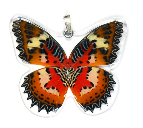 Whole Butterfly Pendant Only, SS bail, Malay Lacewing,