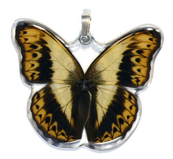 Whole Butterfly Pendant, Herminia Glider