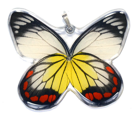 Whole Butterfly Pendant, Painted Jezabel
