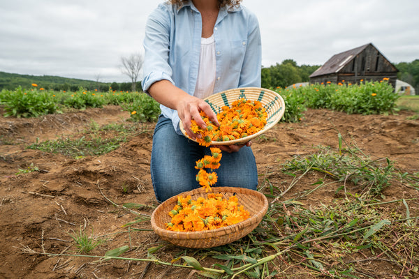 Woman sitting in garden with Calendula flowers in baskets on a cloudy day