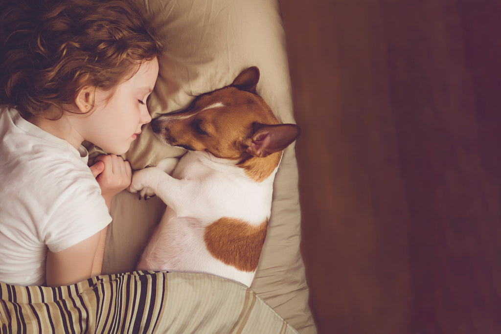 Child Sleeping beside dog on a bed with a cover