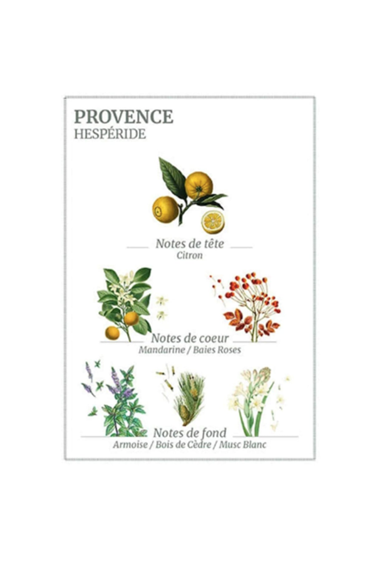 provence marseille liquid soap