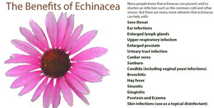 ECHINACEA (1 & 2 FLUID OUNCES LIQUID)