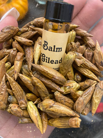 Balm of Gilead Essential Oil
