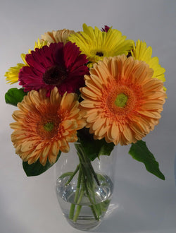 Multi Coloured Gerbera Floral Arrangement