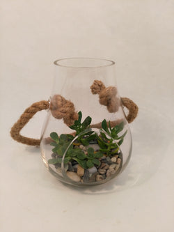 Succulents in Hanging Glass Vase
