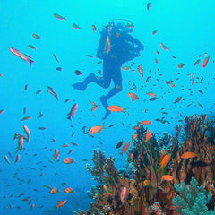 Dive Trips Abroad