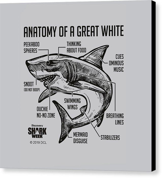 Anatomy of a Great White - Canvas Print