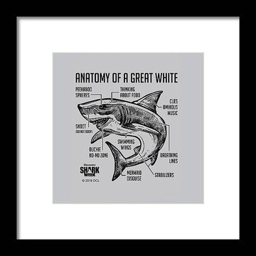 Anatomy of a Great White - Framed Print