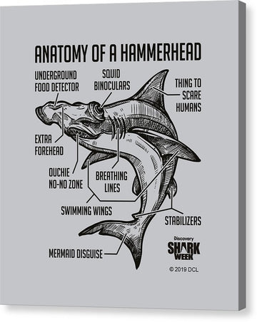 Anatomy of a Hammerhead - Canvas Print