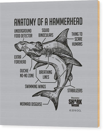Anatomy of a Hammerhead - Wood Print