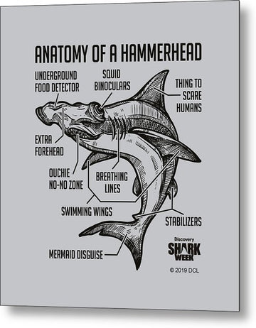 Anatomy of a Hammerhead - Metal Print
