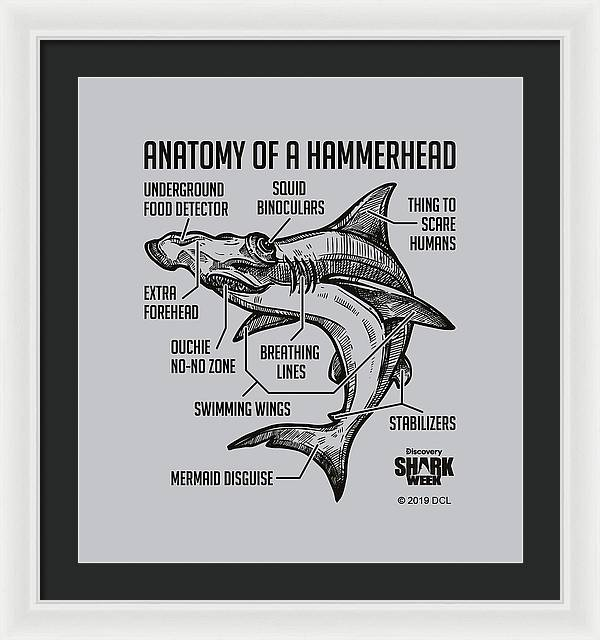 Anatomy of a Hammerhead - Framed Print