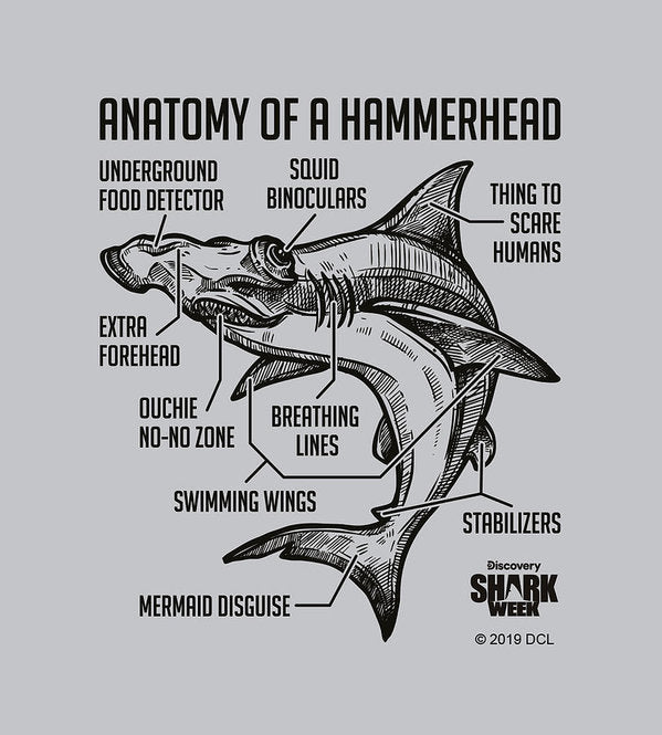 Anatomy of a Hammerhead - Art Print