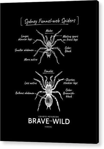 Funnel-Web Spiders - Acrylic Print