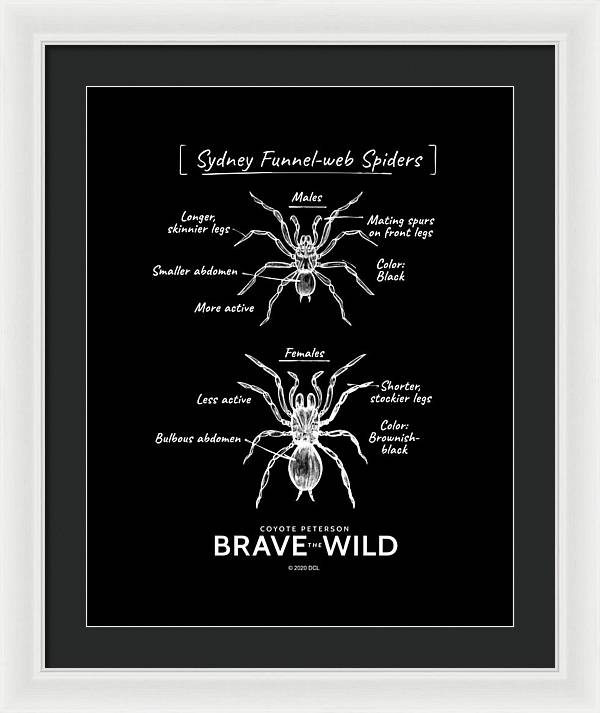 Funnel-Web Spiders - Framed Print