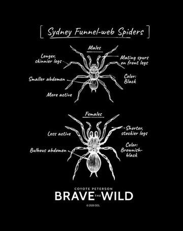 Funnel-Web Spiders - Art Print
