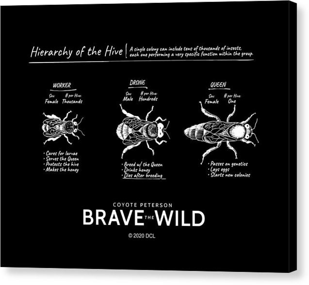 Hierarchy of the Hive - Canvas Print