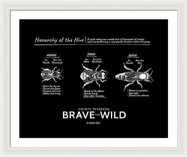 Hierarchy of the Hive - Framed Print