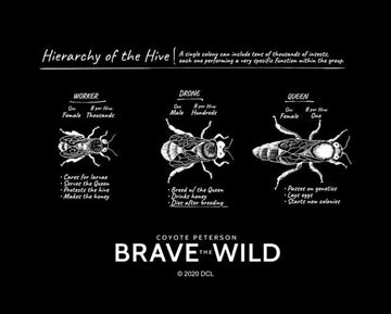 Hierarchy of the Hive - Art Print