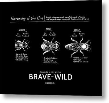 Hierarchy of the Hive - Metal Print