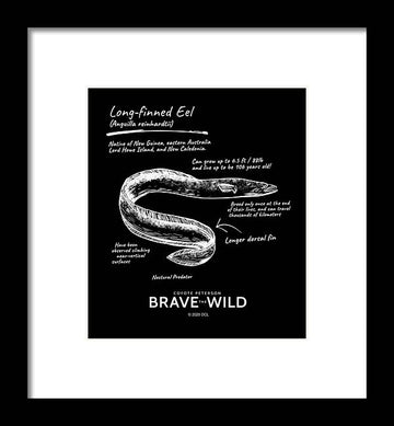 Long Finned Eel - Framed Print