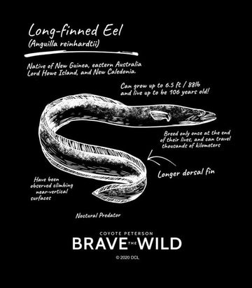 Long Finned Eel - Art Print