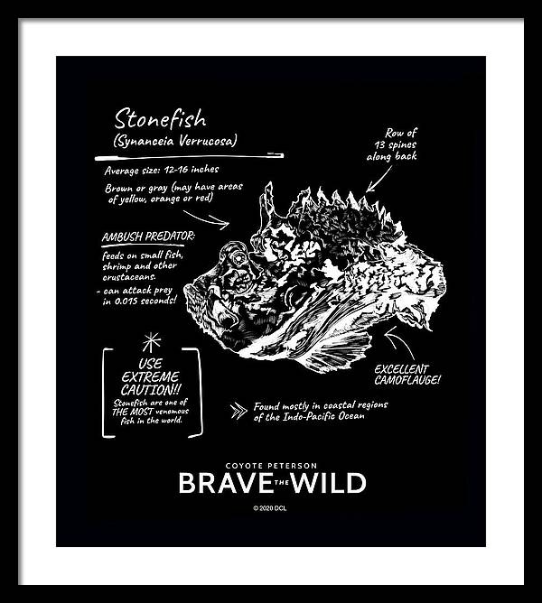 Stonefish - Framed Print