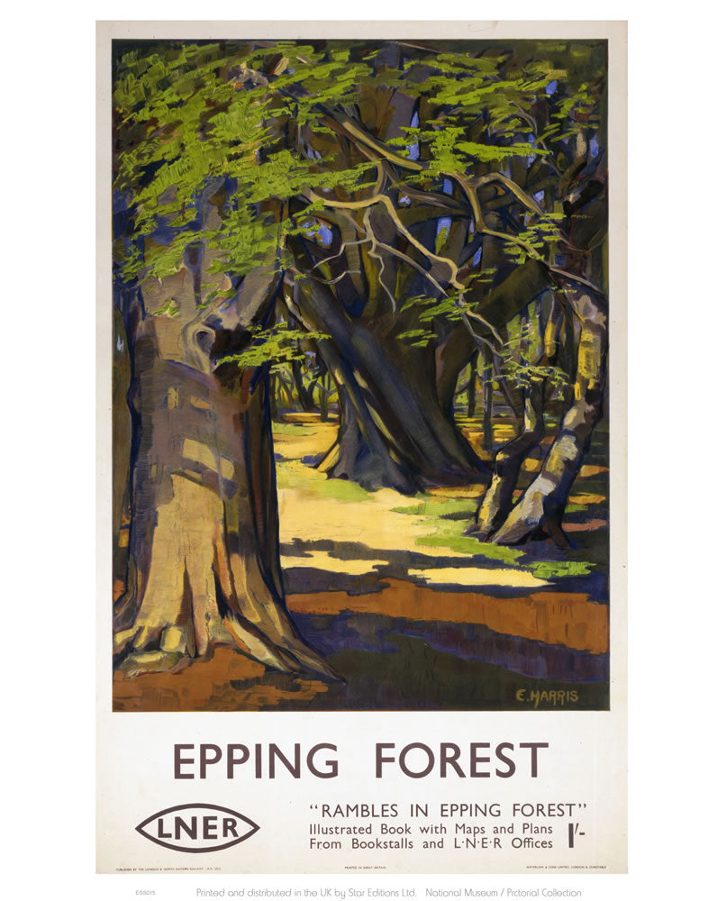 "Rambles in Epping Forest 24"" x 32"" Matte Mounted Print"
