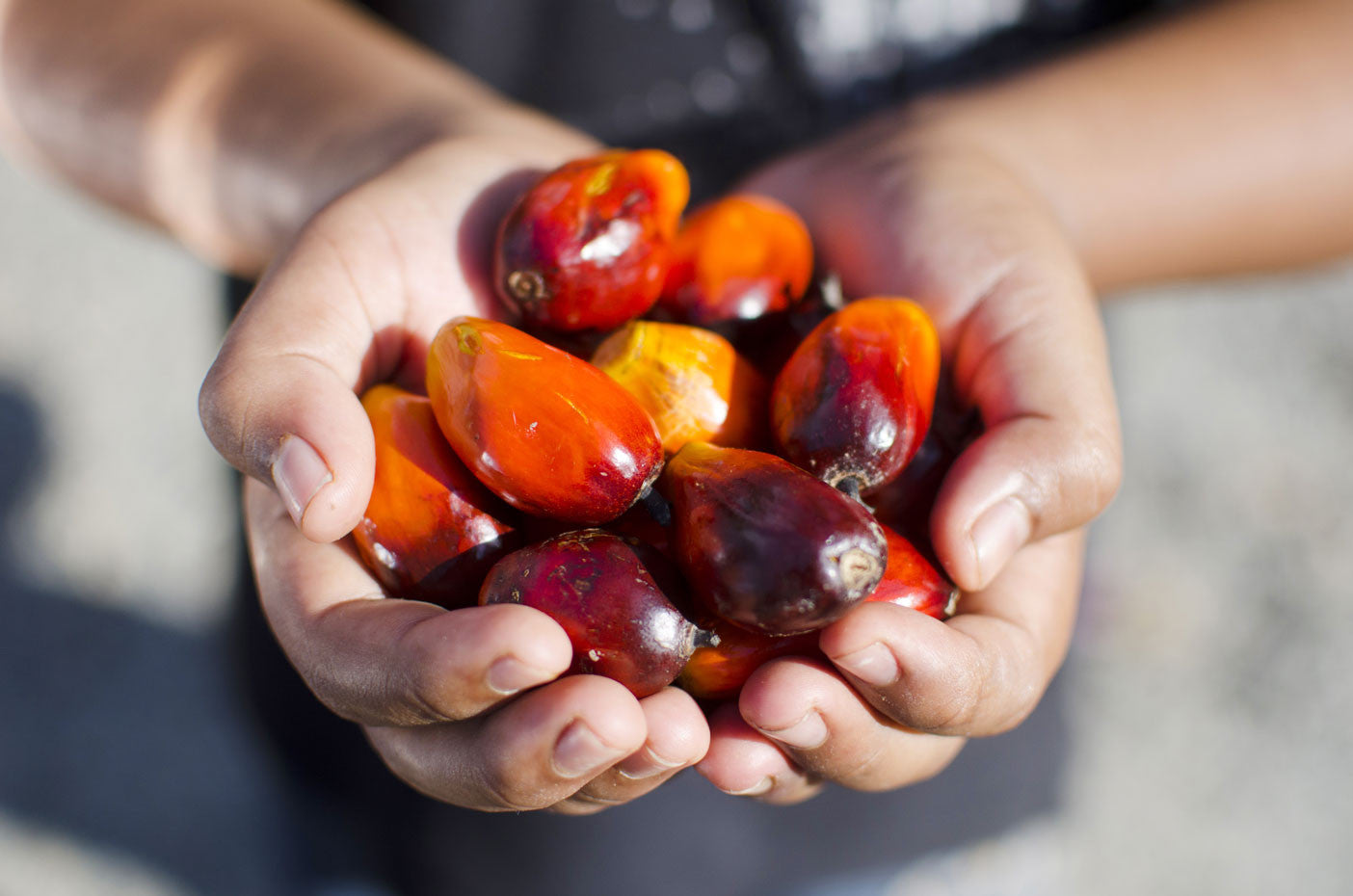 6 Ways to Avoid Palm Oil (and Why You Should)