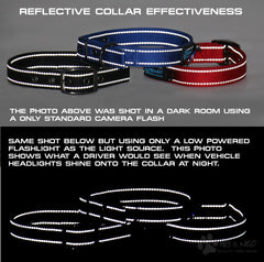 The MAX Dog Collar