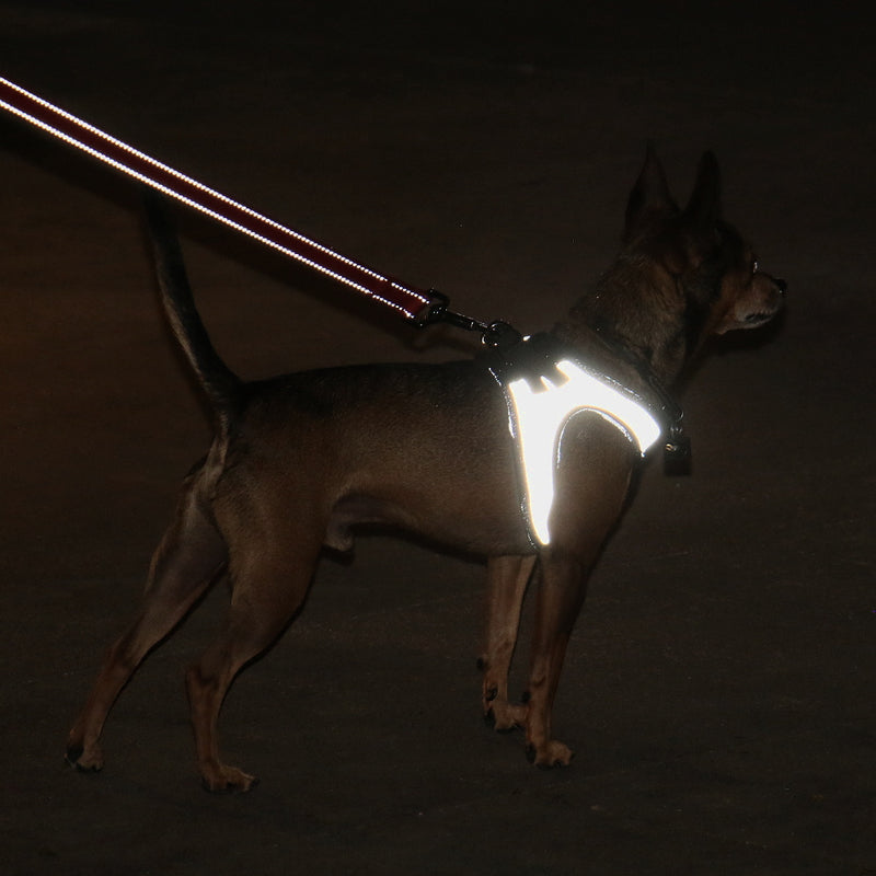 Nanu Small Dog Reflective Dog Harness