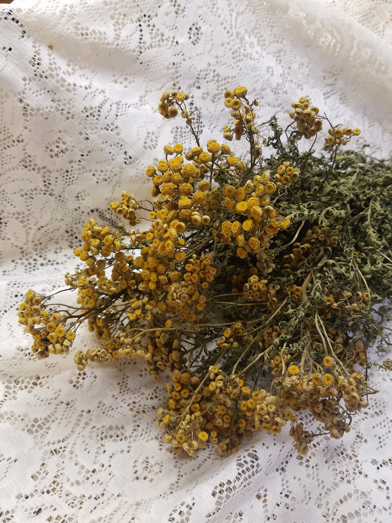 Dried Tansy