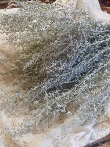 Dried Artemisia