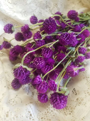 Purple Globe Amaranth